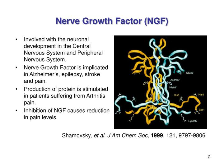 Nerve growth factor ngf