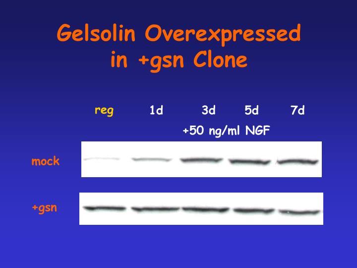 Gelsolin Overexpressed