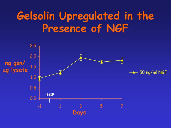 Gelsolin Upregulated in the Presence of NGF