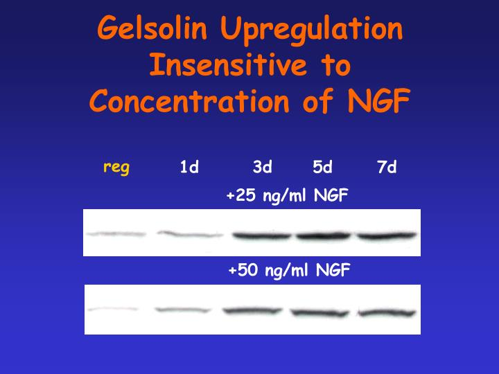 Gelsolin Upregulation Insensitive to
