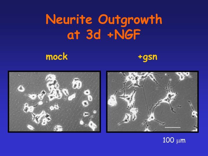 Neurite Outgrowth