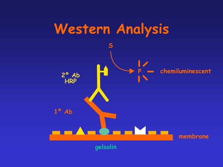 Western Analysis