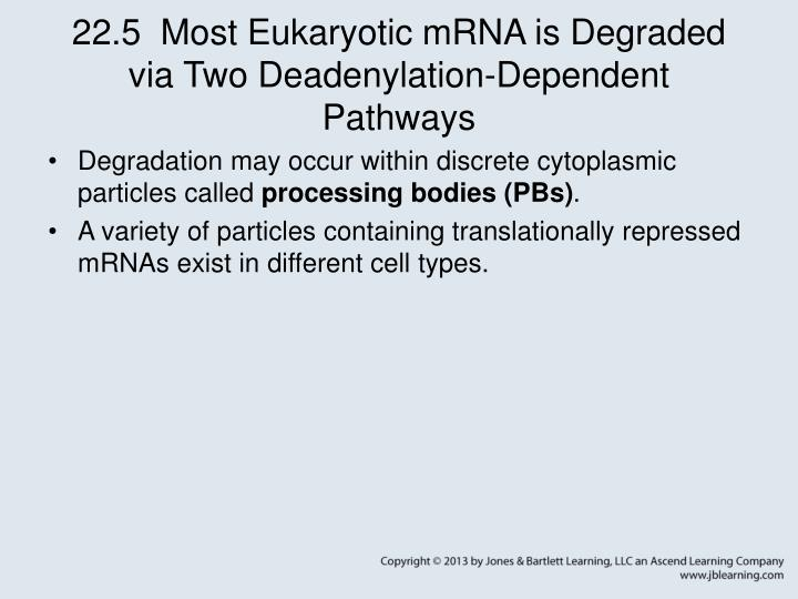 22.5  Most Eukaryotic mRNA is Degraded via Two Deadenylation-Dependent Pathways