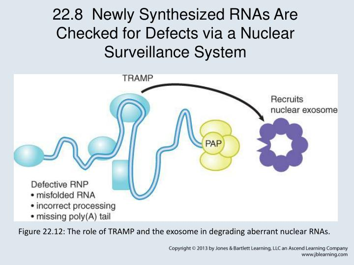22.8  Newly Synthesized RNAs Are Checked for Defects via a Nuclear Surveillance System