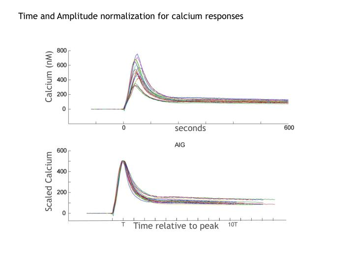 Time and Amplitude normalization for calcium responses