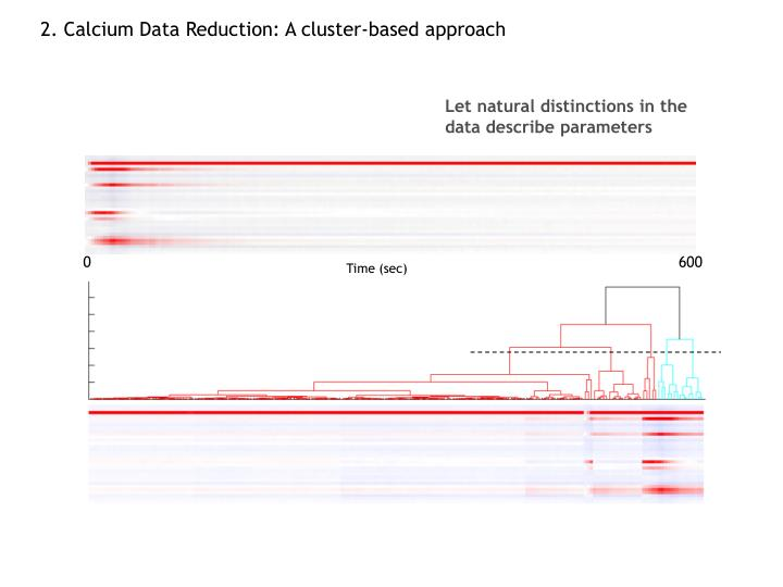 2. Calcium Data Reduction: A cluster-based approach