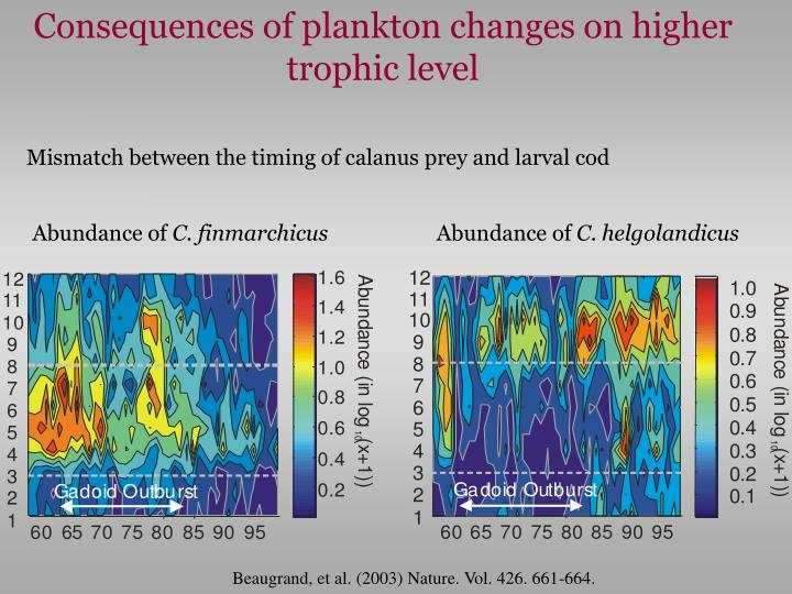 Consequences of plankton changes on higher trophic level