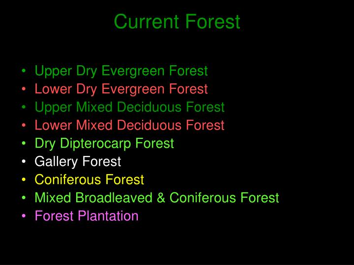 Current Forest