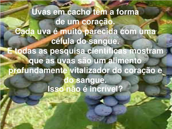 Uvas em cacho têm a forma