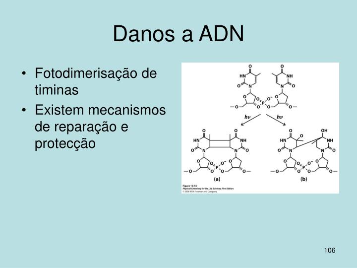 Danos a ADN