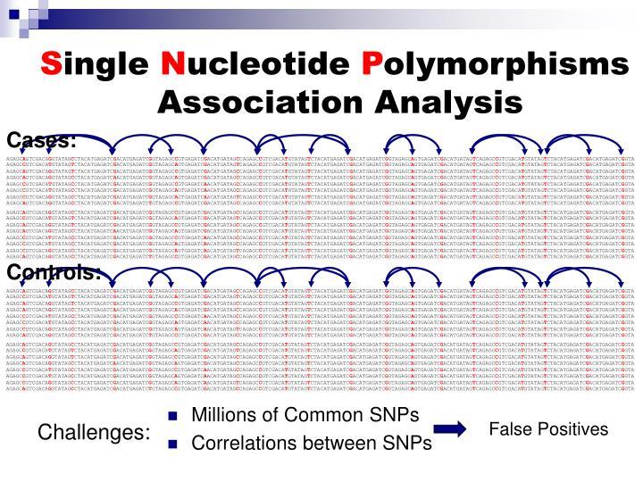 Correlations between SNPs