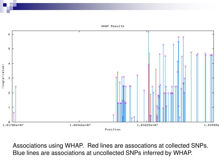 Associations using WHAP.  Red lines are assocations at collected SNPs.