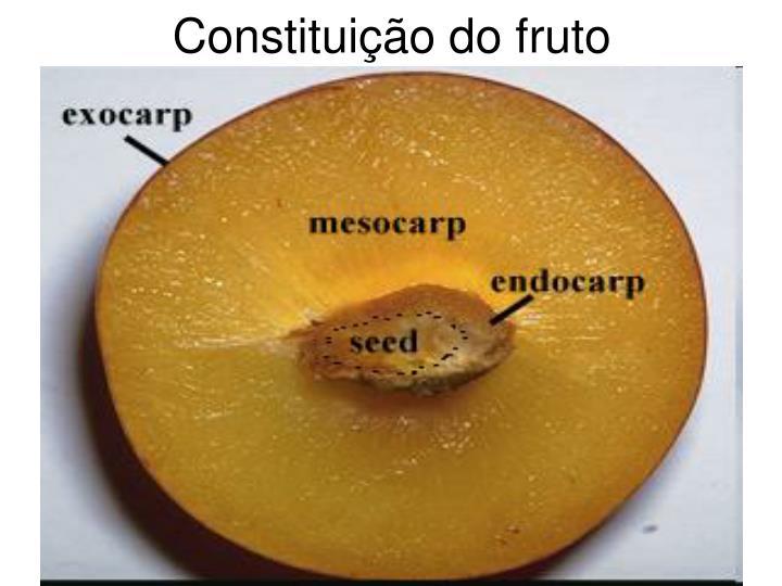 Constituição do fruto