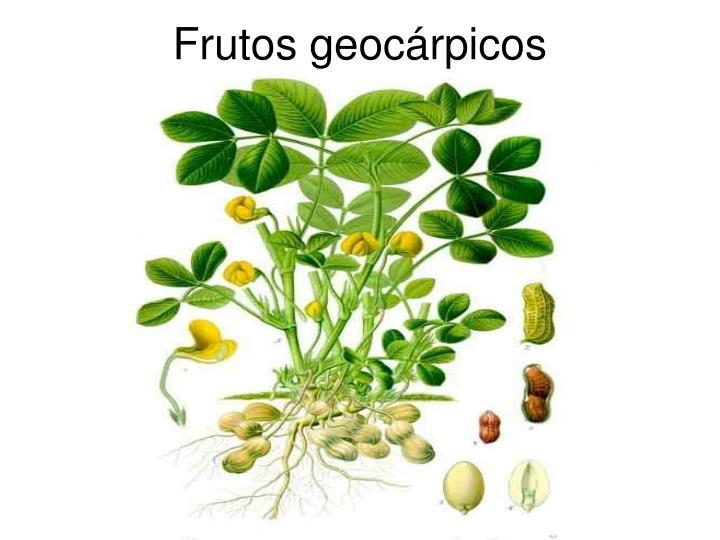 Frutos geocárpicos