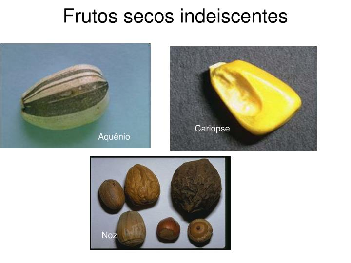 Frutos secos indeiscentes