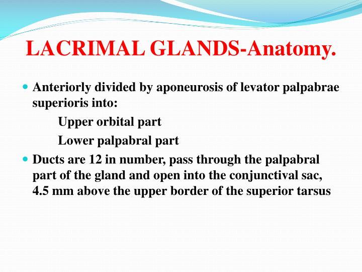 LACRIMAL GLANDS-Anatomy.