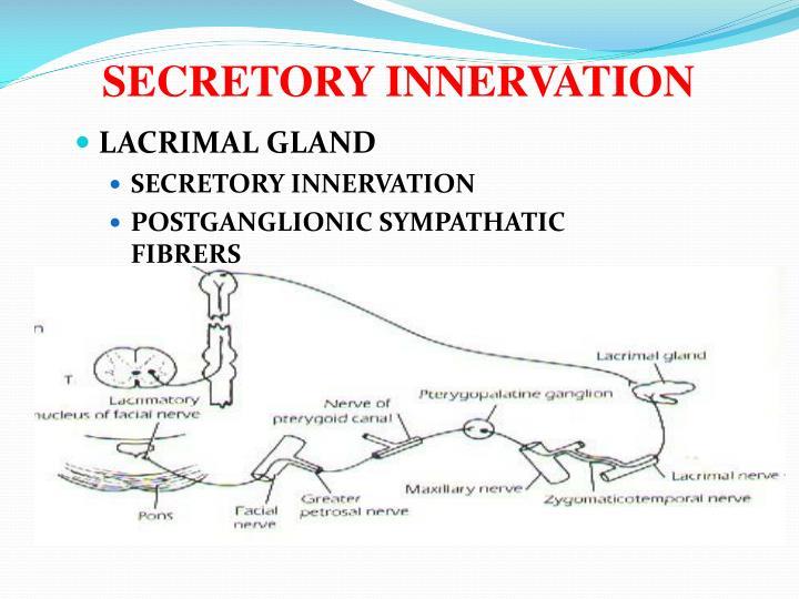 SECRETORY INNERVATION