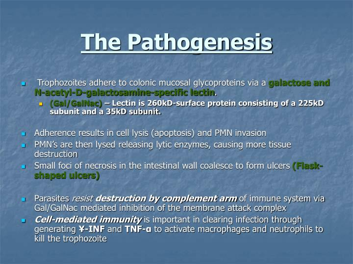 The Pathogenesis