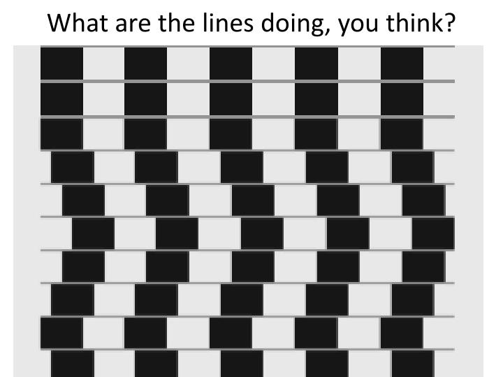 What are the lines doing, you think?