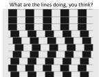 what are the lines doing you think