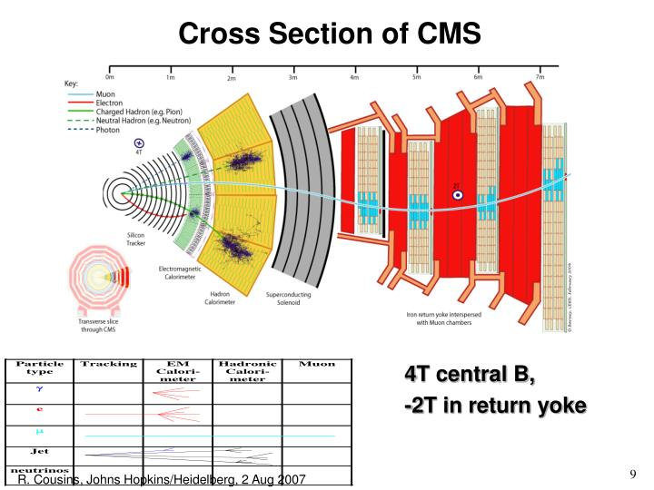 Cross Section of CMS