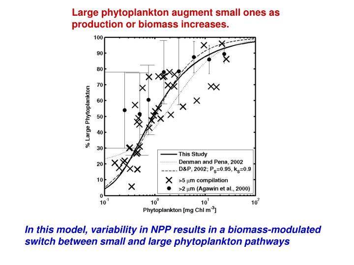 Large phytoplankton augment small ones as production or biomass increases.