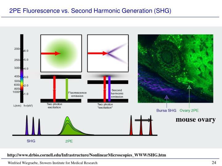 2PE Fluorescence vs. Second Harmonic Generation (SHG)