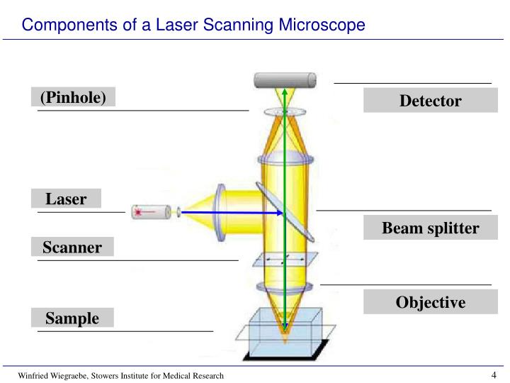 Components of a Laser Scanning Microscope