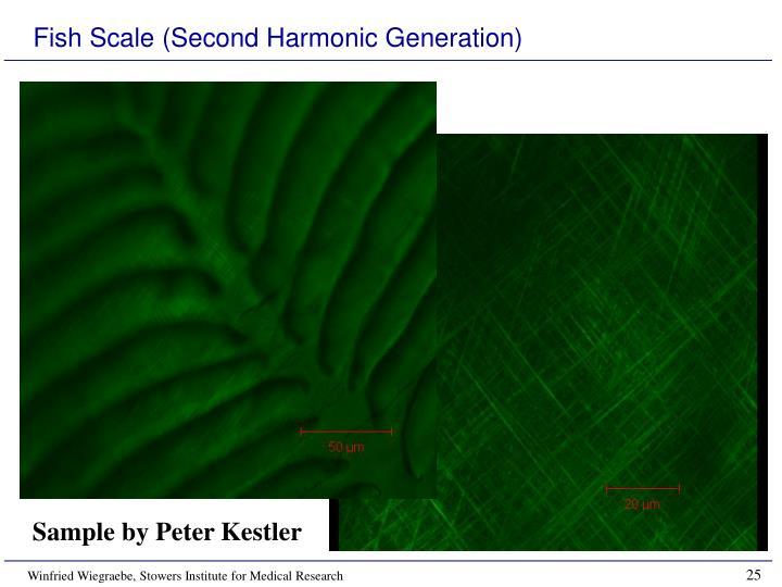 Fish Scale (Second Harmonic Generation)