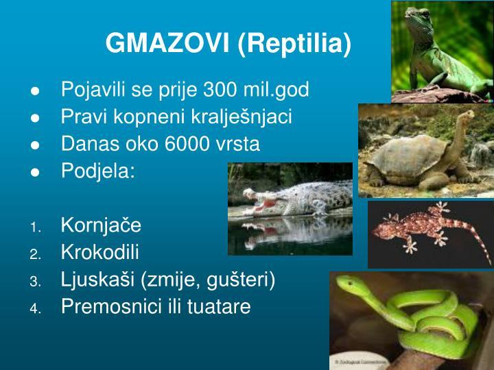 GMAZOVI (Reptilia)