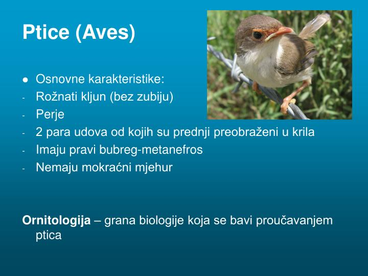 Ptice (Aves)