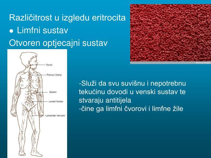 Različitrost u izgledu eritrocita