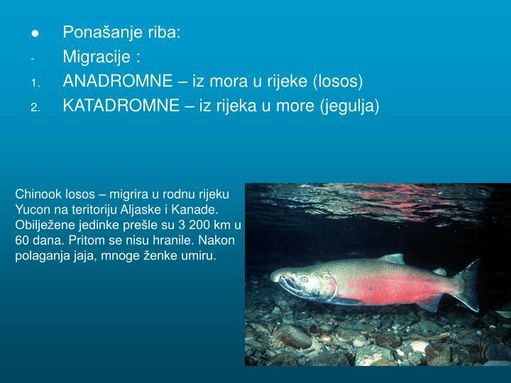 Ponašanje riba: