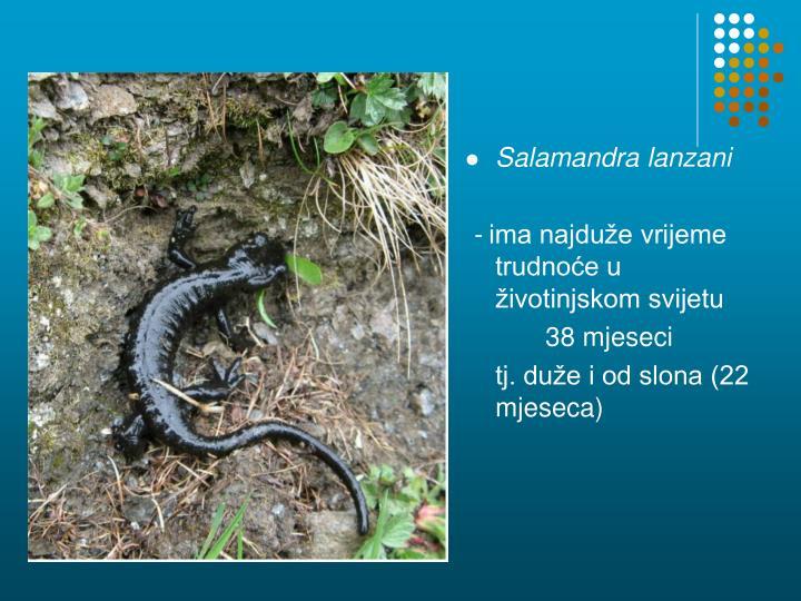 Salamandra lanzani