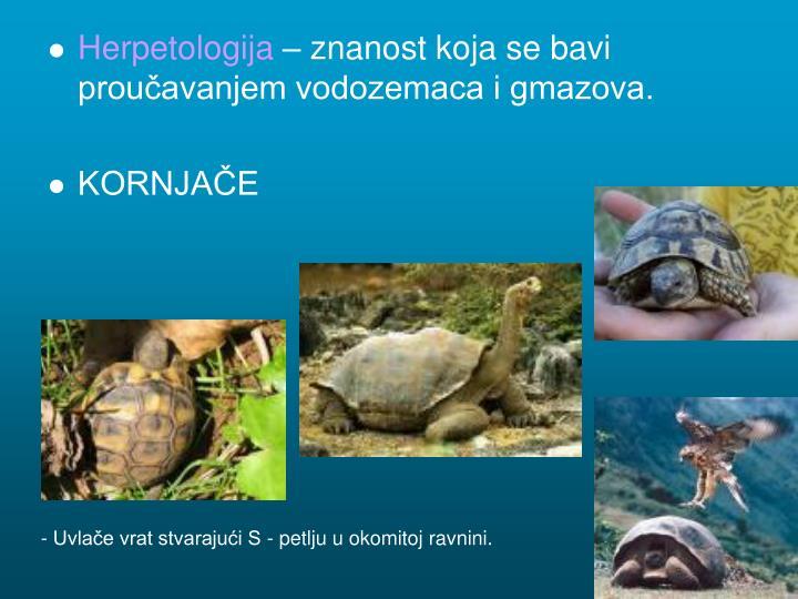 Herpetologija