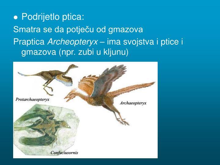 Podrijetlo ptica:
