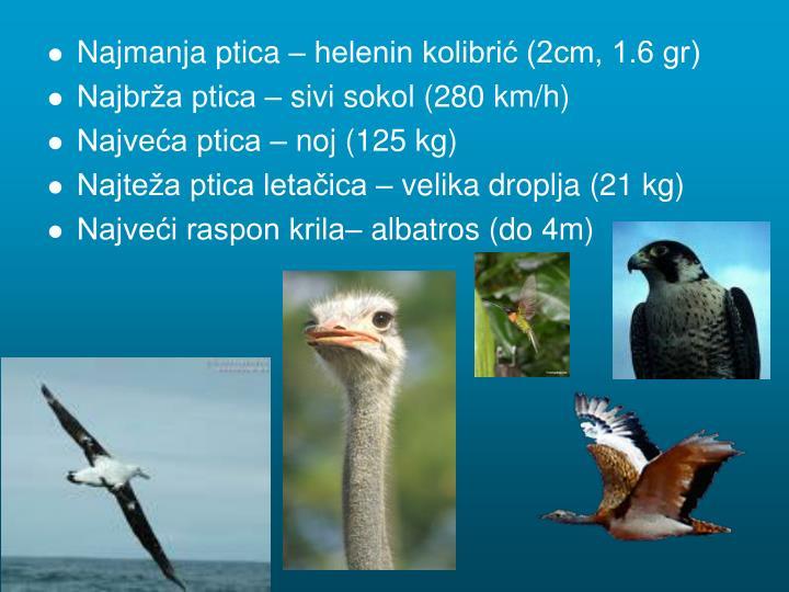 Najmanja ptica – helenin kolibrić (2cm, 1.6 gr)