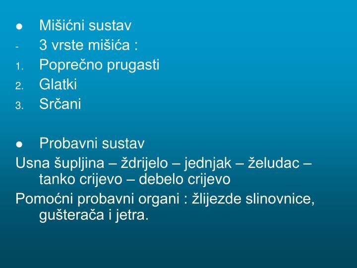 Mišićni sustav