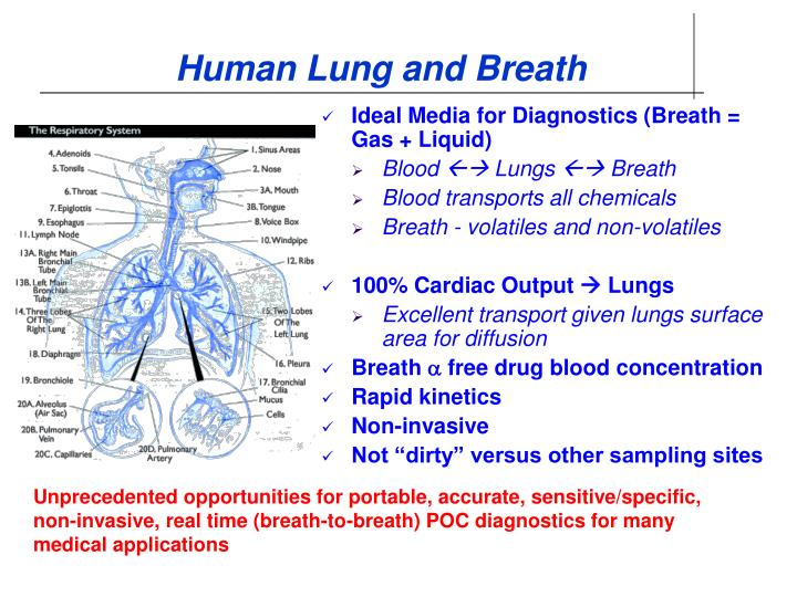Human Lung and Breath