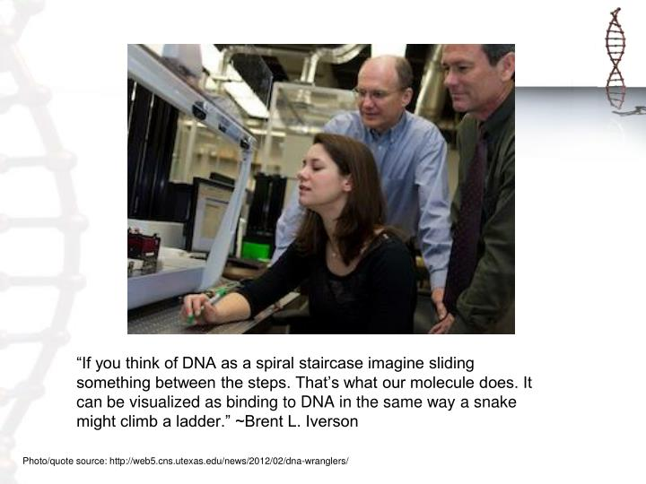 """If you think of DNA as a spiral staircase imagine sliding something between the steps. That's w..."
