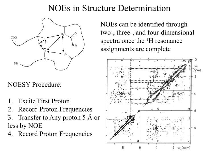 NOEs in Structure Determination