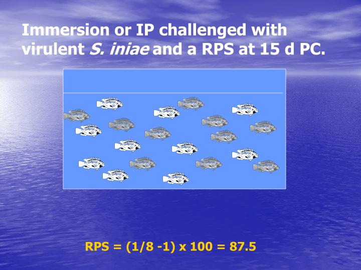 Immersion or IP challenged with virulent