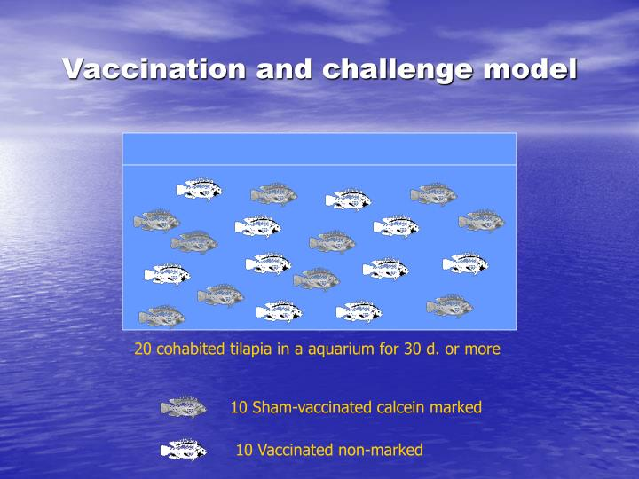 Vaccination and challenge model