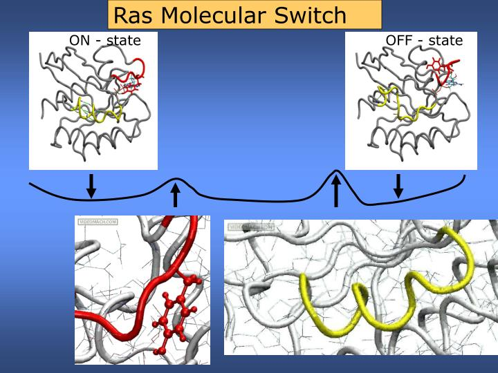 Ras Molecular Switch