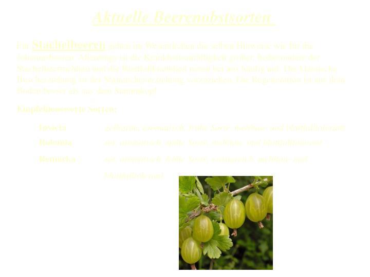 Aktuelle Beerenobstsorten