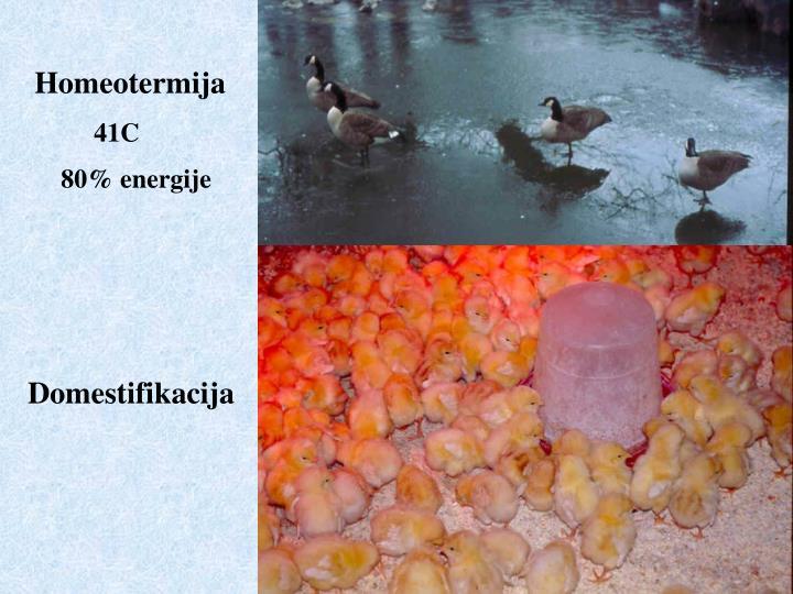 Homeotermija