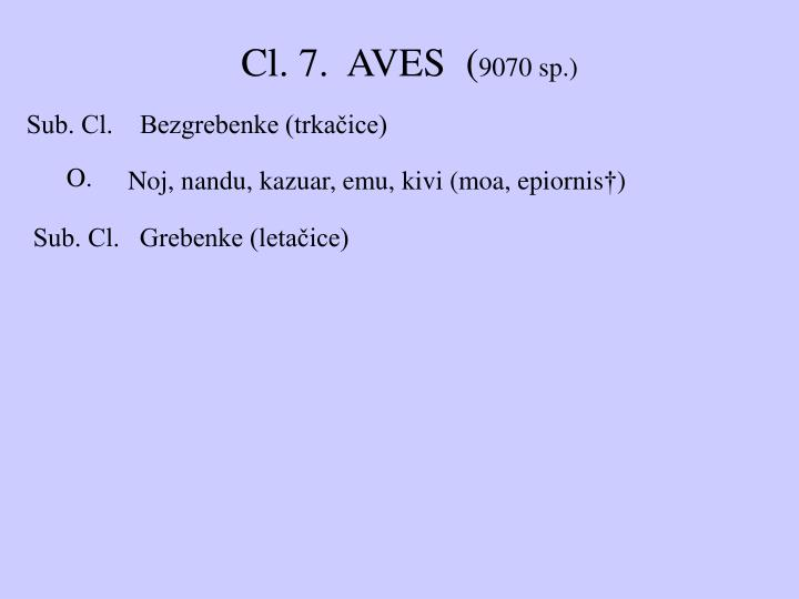 Cl. 7.  AVES  (
