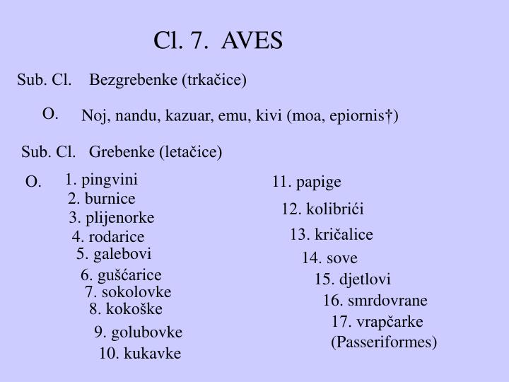 Cl. 7.  AVES