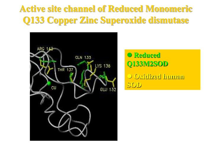 Active site channel of Reduced Monomeric Q133 Copper Zinc Superoxide dismutase