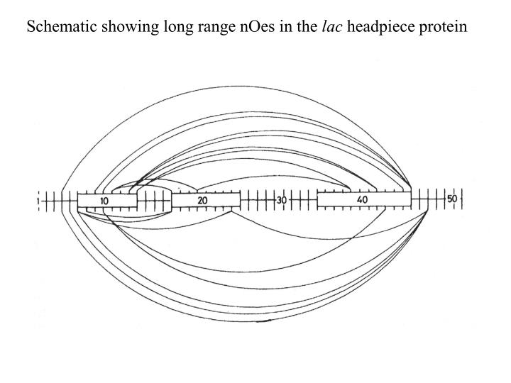 Schematic showing long range nOes in the